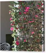 Pink Peacock Colored Bougainvillea Blossoms Climbing Pillar by Cafe Canvas Print