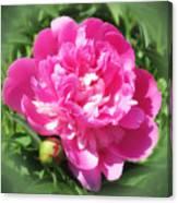 Pink Peony On Green Canvas Print