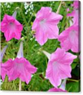 Pink Petunia Flower 9 Canvas Print