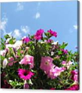 Pink Petunias In The Sky Canvas Print