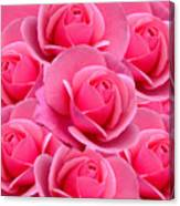 Pink Pink Roses Canvas Print