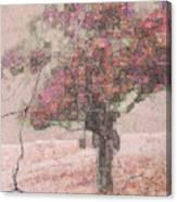 Pink Plaster Canvas Print
