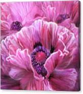 Pink Poppy Splash Canvas Print