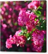 Pink Profusion 1 Canvas Print