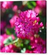 Pink Profusion 2 Canvas Print