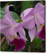 Pink Purple Orchids Canvas Print