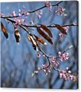 Pink Redbud Tree Blossoms- Fine Art Canvas Print