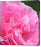 Pink Rose - 2 Canvas Print