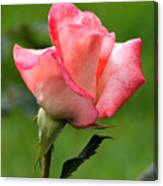 Pink Rose 3 Canvas Print