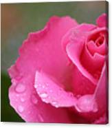 Pink Rose After The Rain Canvas Print