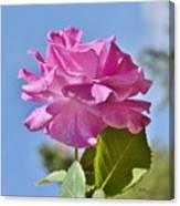 Pink Rose Against Blue Sky I Canvas Print