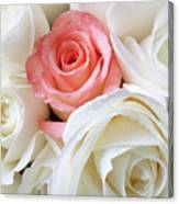 Pink Rose Among White Roses Canvas Print