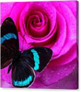 Pink Rose And Black Blue Butterfly Canvas Print