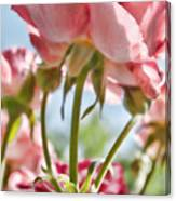Pink Rose Back Light Canvas Print