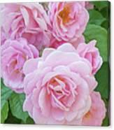 Pink Rose Cluster II Canvas Print