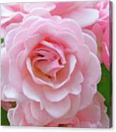 Pink Rose Cluster IIi Canvas Print