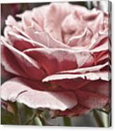 Pink Rose Faded Canvas Print