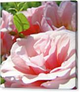 Pink Rose Flower Garden Art Prints Pastel Pink Roses Baslee Troutman Canvas Print