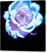 Pink Rose Has The Blues Canvas Print