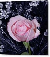 Pink Rose Of Imperfection Canvas Print