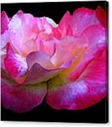 Pink Rose On Black 4 Canvas Print