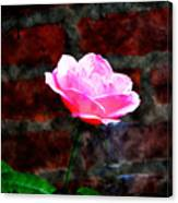Pink Rose On Red Brick Wall Canvas Print