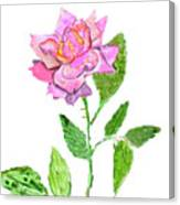 Pink Rose, Painting Canvas Print