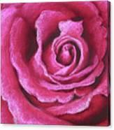 Pink Rose Pastel Painting Canvas Print