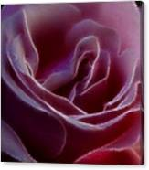 Pink Rose Portrait Canvas Print