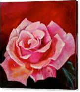 Pink Rose With Dew Drops Jenny Lee Discount Canvas Print