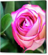 Pink Rose With Leaves Canvas Print