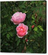 Pink Roses In A Garden Canvas Print
