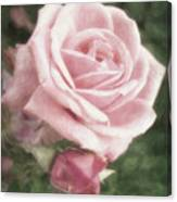 Pink Roses In Anzures 2 Nostalgic Canvas Print