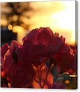 Pink Roses Sunset Canvas Print