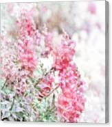 Pink Snapdragons Watercolor Canvas Print