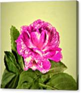 Pink Speckled Rose 1 Canvas Print