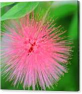 Pink Spikes Canvas Print