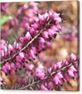 Pink Spray Of Flowers Canvas Print