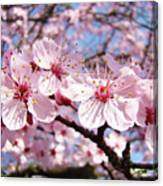 Pink Spring Blossoms Art Print Blue Sky Landscape Baslee Troutman Canvas Print