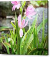 Pink Spring Bulb Canvas Print