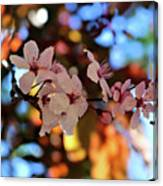 Pink Spring Flowers Canvas Print