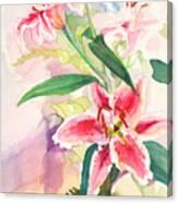 Pink Stargazer Lilies Canvas Print