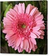 Pink Stunner Canvas Print