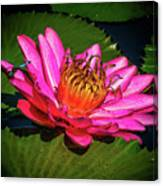 Pink Summer Water Lily Canvas Print