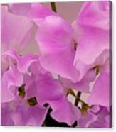 Pink Sweetpeas Canvas Print