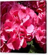 Pink-tacular Canvas Print