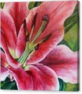 Pink Tiger Lily Canvas Print