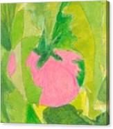 Pink Tomato Canvas Print