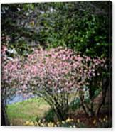 Pink Tree And Daffodils Canvas Print