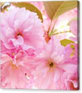 Pink Tree Blossoms Art Prints Spring Blossoms Baslee Troutman Canvas Print